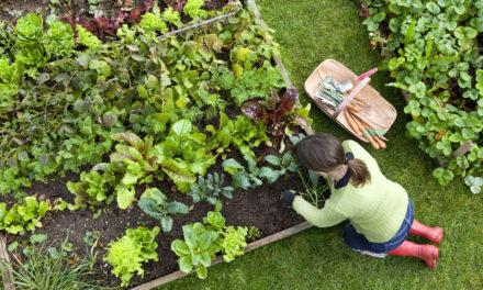 "Garden Guru Kicks Off ""100 Garden Challenge"""