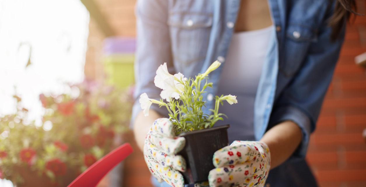 Your March Gardening Checklist