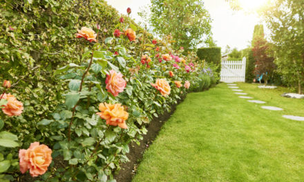 Tips for Getting Your Yard Ready for Summer