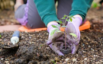 Spring Gardening Classes Popping Up in Colorado