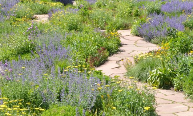 Going native by converting turf to native plants