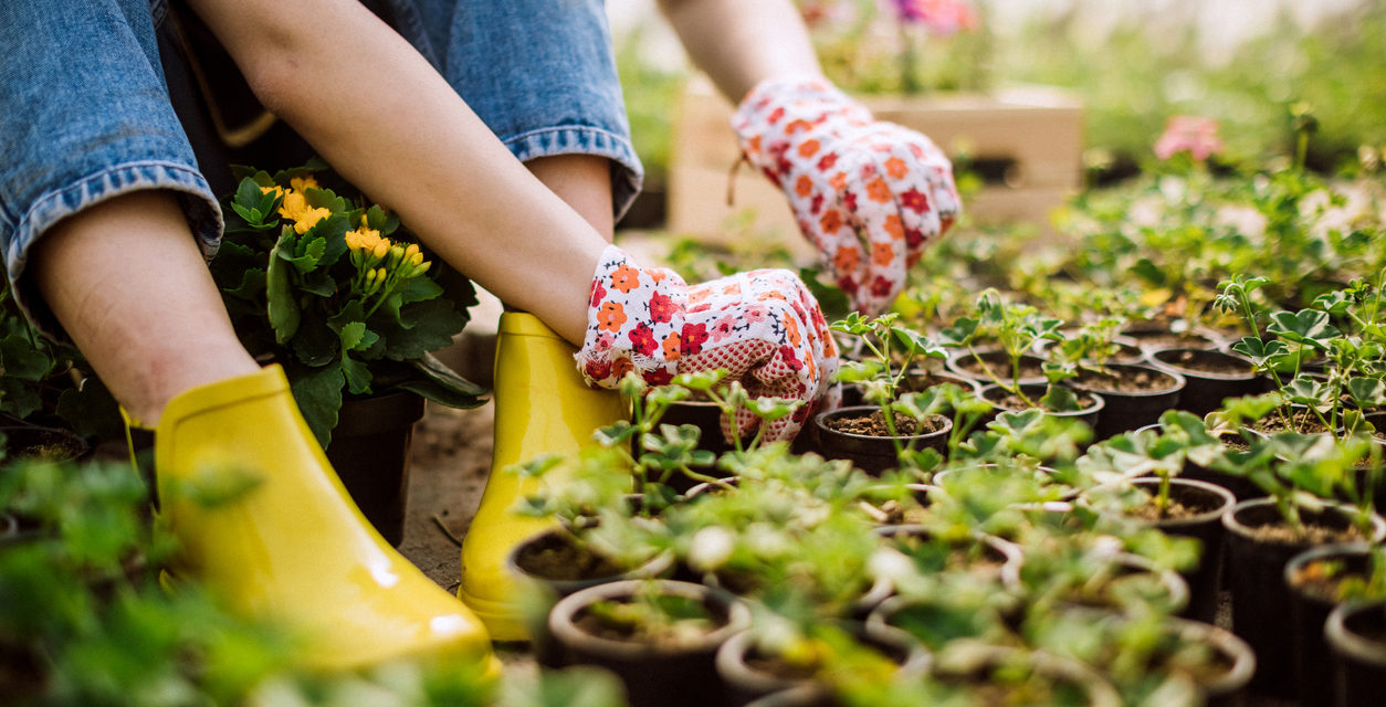 Year-round gardening: Here's your May checklist