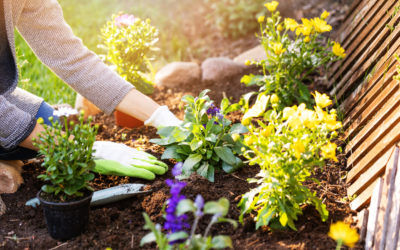 Guide To Picking Landscape Plants for Colorado Gardens