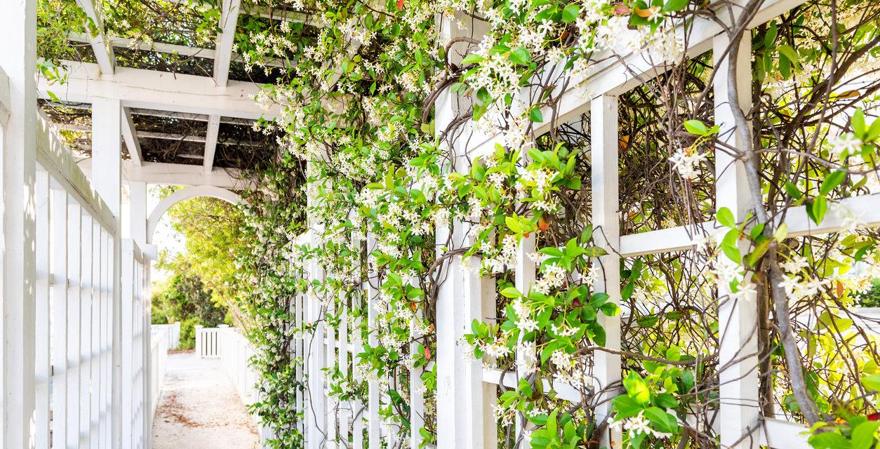 The Best Vines for Your Garden