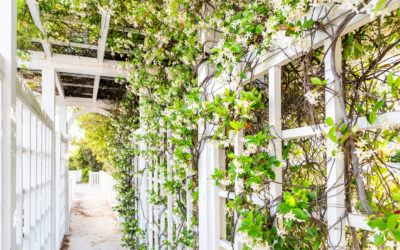 The Best Vines for Your Garden